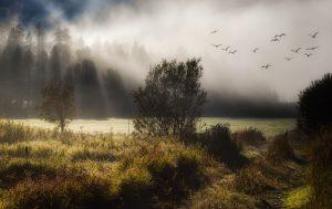 fog, meadow, trees